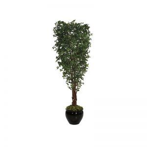 10' Black Olive Tree - Green|Indoor