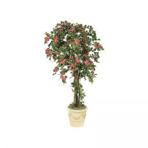 6' Bougainvillea Tree - Beauty|Indoor