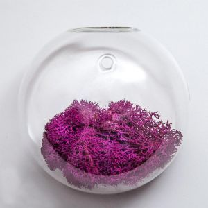 "7"" Wall Bubble Terrarium"