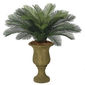 3' Small Sago Palm Cluster, Outdoor Rated