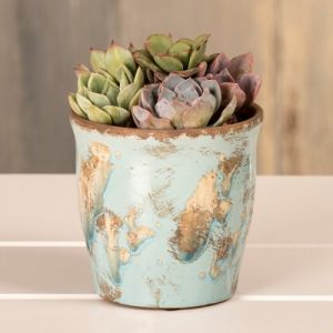 Live Mixed Succulents in Arctic Blue Ceramic Container