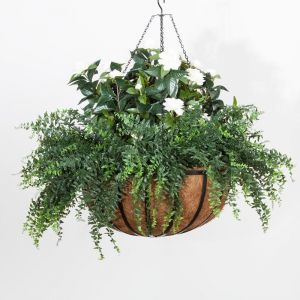 Gardenia/Buckler Fern in 22in Hanging Basket, Outdoor Rated