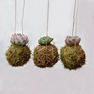 Knollbrook Set of 3 Hanging Succulent Garden