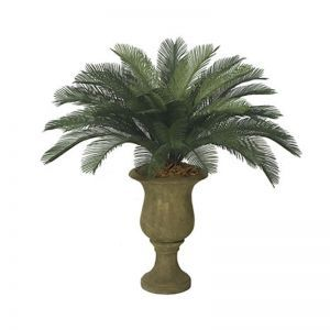 3' Medium Sago Palm Cluster, Outdoor Rated