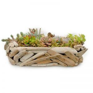 Oval Driftwood Planter w/ Live Succulents