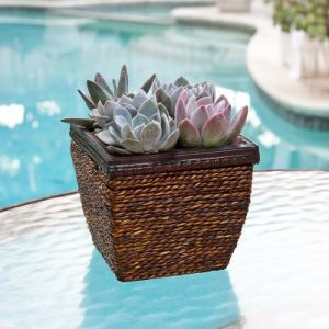 Succulent Mix in Wood and Wicker Container