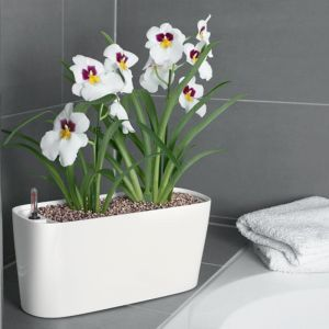 Windowsill Self Watering Planter - 6 Colors