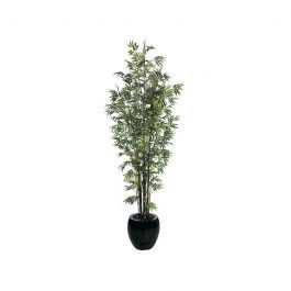 10 Japanese Bamboo Tree Green Indoor
