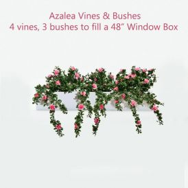 "48"" Window Box Recipe for Azaleas"