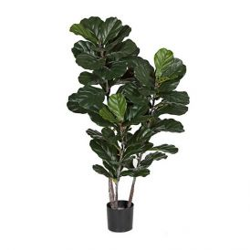 52in. Fiddle Leaf Fig (IFR)