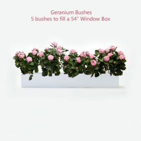 DIY Artificial Geraniums for Window Boxes