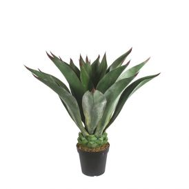 39in. Duraleaf Agave Macroacantha, Outdoor