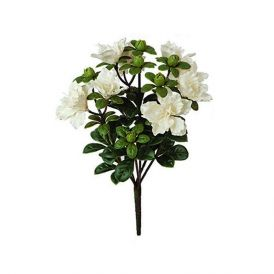 14in. Tall White Azalea Bush