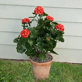 26in. Outdoor Artificial Geraniums - Red