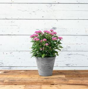 10in. Naples Planter - 3 Colors