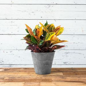 12in. Naples Planter - 3 Colors