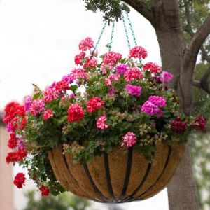 "14"" English Garden Flat Steel Hanging Basket with Coco Liner and Chain"