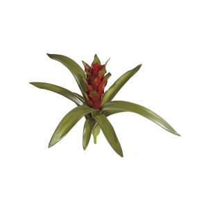 15in. Guzmania Bromeliad - Red/Green, Indoor