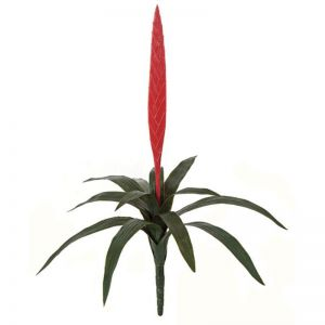 27in. Vriesea Bromeliad, Red - Outdoor