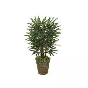 3' Lady Palm Tree - Green|Indoor