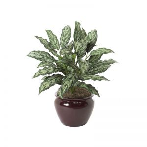 30in. Aglaonema Plant - Two Tone Green|Indoor