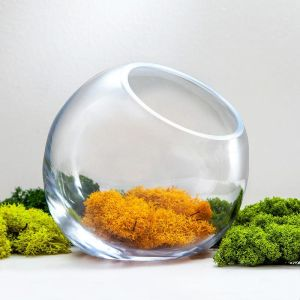 "7.5"" Medium Terrarium Bubble Bowl"