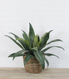 Artificial Agave Plant in Basket