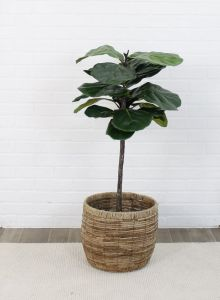 Artificial Fig Tree in Basket - 4' Tall