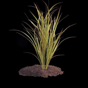 48in. Savannah Grass - Outdoor Rated