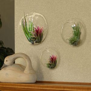 Wall Terrarium Bubbles - Set of 3