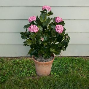 26in. Outdoor Artificial Geraniums - Pink