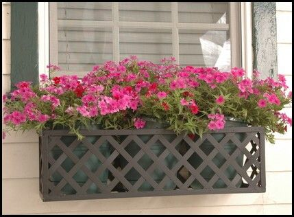 Iron Lattice Window Boxes