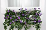 Window Box Artificial Flower Arrangements