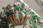 Artificial Azalea Hanging Baskets